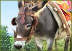 Eselwandern Eifel